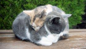 Dos pequeños gatitos soñolientos Imagen de archivo