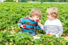 Dos pequeños niños pequeños del hermano en la fresa cultivan en verano Fotografía de archivo