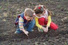 Dos pequeños niños que plantan los gérmenes en el campo foto de archivo libre de regalías