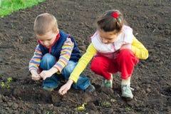 Dos pequeños niños que plantan los gérmenes en el campo fotografía de archivo