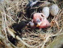 Dos pequeños pájaros fotografía de archivo