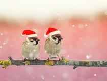 Dos pequeños pájaros divertidos en los sombreros festivos de la Navidad que se sientan en un Br Imagen de archivo