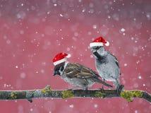 Dos pequeños pájaros divertidos que se sientan en una rama en invierno en la nieve Foto de archivo