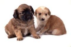 Dos pequeños perros fotografía de archivo