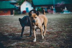 Dos pequeños perros que corren en la yarda no sé feliz qué t fotografía de archivo