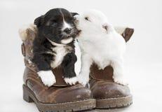 Dos perritos blancos y negros en el estudio Imagen de archivo