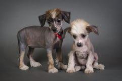 Dos perritos chinos del templo. Foto de archivo