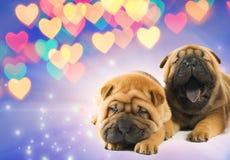 Dos perritos del shar-pei en amor fotos de archivo libres de regalías