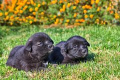 Dos perritos en la hierba Imagenes de archivo