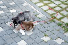 Dos perritos fornidos Perros de la litera que duermen en la calle imagen de archivo