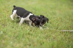 Dos perritos y un palillo fotografía de archivo