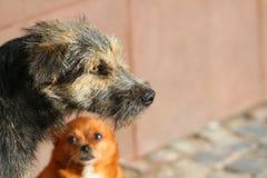 Dos perros imágenes de archivo libres de regalías
