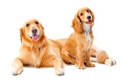 Dos perros Fotos de archivo