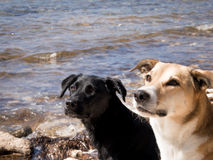 Dos perros Foto de archivo libre de regalías
