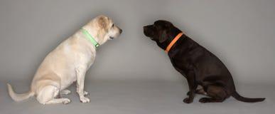Dos perros Imagen de archivo