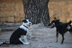 Dos perros Imagenes de archivo