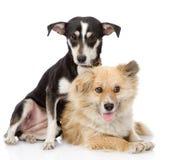 Dos perros amistosos Aislado en el fondo blanco Fotos de archivo libres de regalías