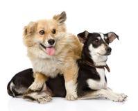 Dos perros amistosos Aislado en el fondo blanco Imagen de archivo libre de regalías