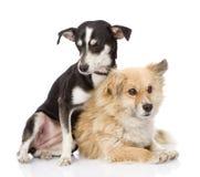 Dos perros amistosos Aislado en el fondo blanco Foto de archivo