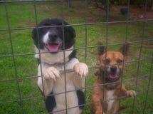 Dos perros amistosos que se colocan en la cerca imagen de archivo libre de regalías