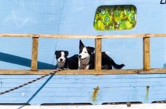 Dos perros blancos y negros Imagen de archivo