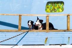 Dos perros blancos y negros Foto de archivo libre de regalías