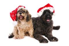 Dos perros con los sombreros de Papá Noel Imagenes de archivo