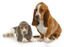 Dos perros de afloramiento Imagen de archivo