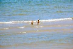 Dos perros de los amigos están jugando en el mar Fotos de archivo