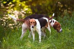 Dos perros en el bosque fotos de archivo libres de regalías