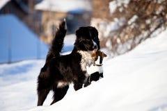 Dos perros en la nieve Foto de archivo libre de regalías