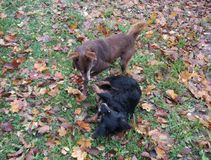 Dos perros en un parque Fotos de archivo