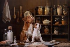 Dos perros están cocinando en la cocina Animal doméstico en casa fotografía de archivo