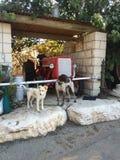 Dos perros hermosos y un camión fotografía de archivo