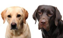 Dos perros lindos Foto de archivo libre de regalías