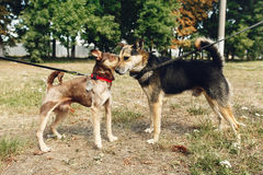 Dos perros lindos que hablan jugar y divertirse del outsid del refugio Foto de archivo libre de regalías