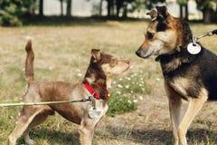 Dos perros lindos que juegan y que se divierten del refugio afuera en sol Foto de archivo