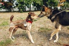 Dos perros lindos que juegan y que se divierten del refugio afuera en sol Fotos de archivo libres de regalías