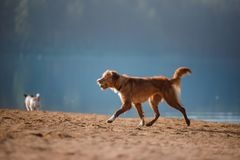 Dos perros que corren en la orilla arenosa del lago Imagenes de archivo