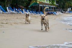 Dos perros que corren en una playa Imagen de archivo libre de regalías