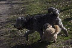 Dos perros que juegan imagen de archivo