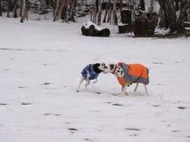 Dos perros que juegan en la nieve Fotografía de archivo