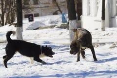 Dos perros que juegan en nieve Imágenes de archivo libres de regalías