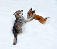 Dos perros que juegan en una nieve acumulada por la ventisca profunda Imágenes de archivo libres de regalías