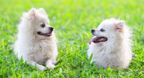 Dos perros que miran fijamente el uno al otro Imagen de archivo libre de regalías