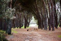 Dos perros que miran uno a Imagen de archivo libre de regalías