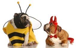 Dos perros se vistieron para víspera de Todos los Santos foto de archivo libre de regalías