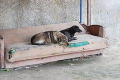 Dos perros sin hogar tristes mienten en un sofá viejo desagradable contra el muro de cemento en un mercado abandonado Fotografía de archivo
