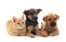Dos perros y un gato imagenes de archivo