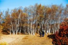 Dos personas en el bosque Imagen de archivo